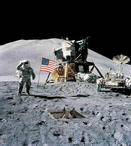basement horse on the moon